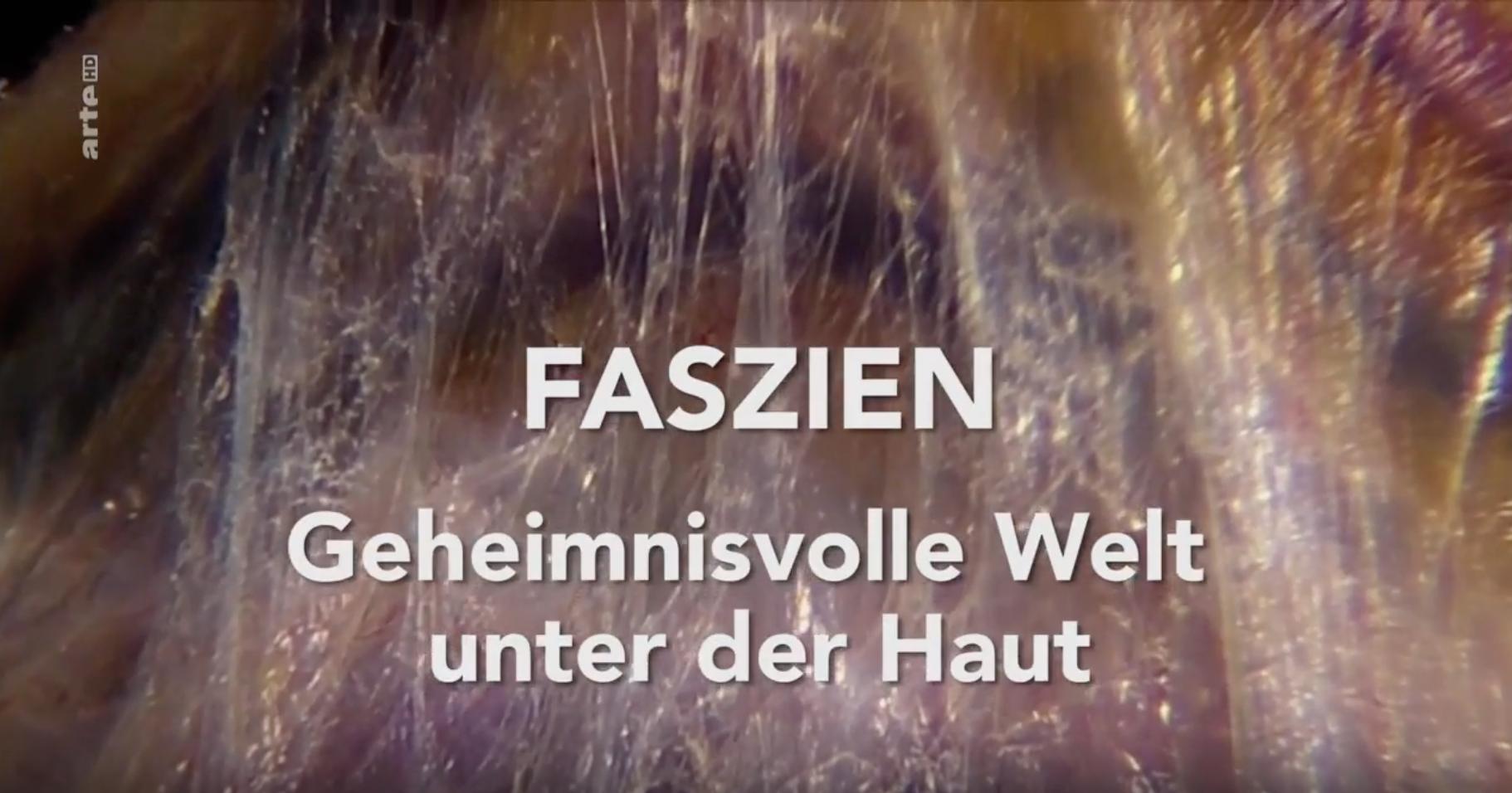Faszien – Geheimnisvolle Welt unter der Haut